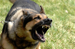 dog aggression and behavior problems Richmond Va Williamsburg Va Hampton Roads